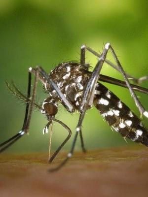 dengue-alerta