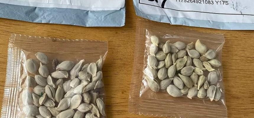 agricultura-alerta-sobre-perigos-do-recebimento-de-pacotes-de-sementes-nao-solicitadas-XcX1