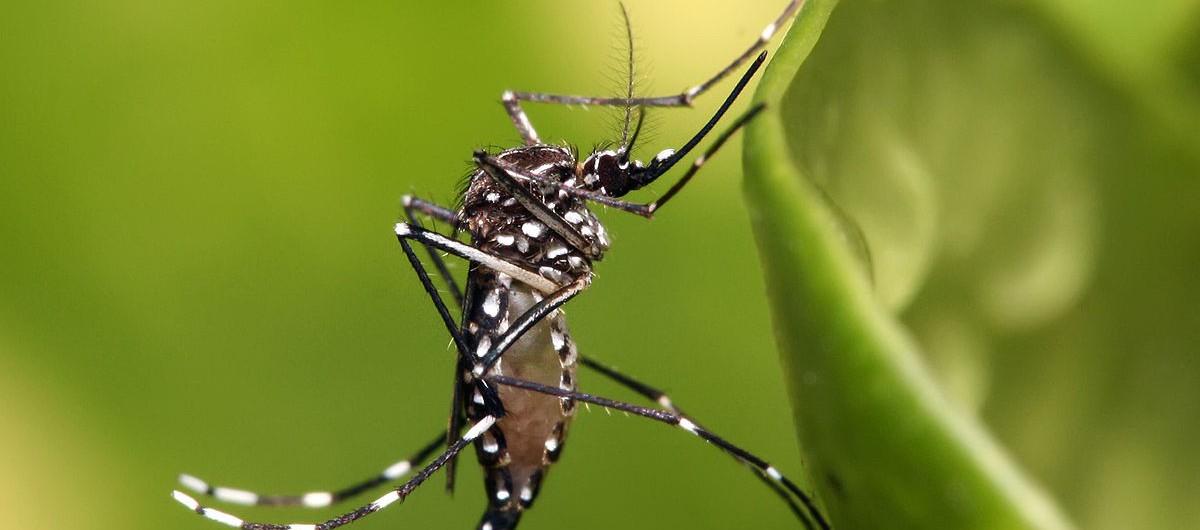 thumbnail_Dengue